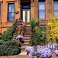 Springtime In Brooklyn by Ed Weidman