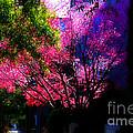 Springtime In Charleston by Susanne Van Hulst