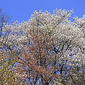 Springtime In Great Balsam Mountains by Mountains to the Sea Photo
