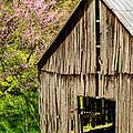Springtime In Kentucky by Mary Carol Story