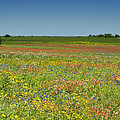 Springtime In Texas 2 by Stephen Anderson