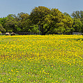 Springtime In Texas 3 by Stephen Anderson