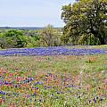 Springtime In Texas by Gary Richards