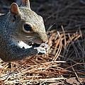 Springtime Nutcracker by Maria Urso