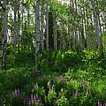 Springtime On The Grand Mesa by Ernie Echols
