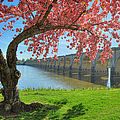 Springtime On The River by Geoff Crego