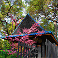 Springtime Pagoda by Lynn Bauer