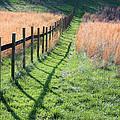 Springtime Pasture by Kristin Elmquist