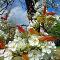 Springtime Pear Blossoms - Hello Spring by Rebecca Korpita