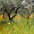Springtime Sicily by Pauline Margarone
