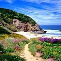 Springtime Trail by Cliff Wassmann
