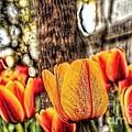 Springtime Tulips by Jim Lepard