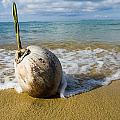 Sprouting Coconut Washed Up On Beach by Naki Kouyioumtzis