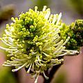 Sprouts On A Bush by Debbie Orlando