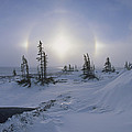 Spruce Forest With Sundogs Hudson Bay by Konrad Wothe