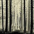 Spruce Magic by Rosanne Jordan