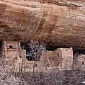 Spruce Tree Cliff Dwelling by Claus Siebenhaar