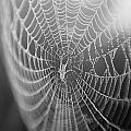 Spyder Web by Matthew Pace