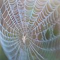 Spyder's Web by Matthew Pace
