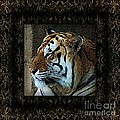 Sq Tiger Profile 6k X 6k Bboo Matt by Dale Crum
