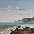 Squadron Of Pelicans Central Califonia by Ian Donley