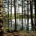 Square North Woods Lake by Birgit Tyrrell