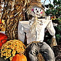 Square Scarecrow by Frozen in Time Fine Art Photography