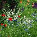 Squarely Spring Floral Garden by Byron Varvarigos