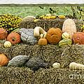 Squash Gourds And Pumpkins by Les Palenik