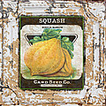Squash On Vintage Tin by Jean Plout