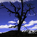 Squigly Tree by Janice Westerberg