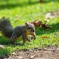 Squirrel 1 by Nadim Baki