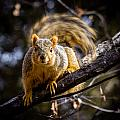 Squirrel 2 by Chad Rowe