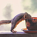 Squirrel And Coffee by Peggy Collins