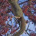 Squirrel by Becca Buecher