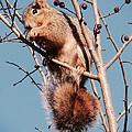 Squirrel Berry by Susan Garren