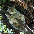 Squirrel By Nest by Ben Upham III