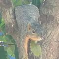 Squirrel Chillin by Donna Wilson
