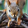 Squirrel Close-up by Kerri Farley