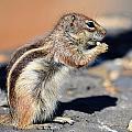 Squirrel Con Queso by Alex Lyons
