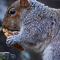 Squirrel Eating Granola by Eric Soderman