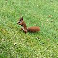 Squirrel Eating Nuts by Frank Gaertner