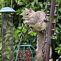 Squirrel Eating Nuts by Tony Murtagh