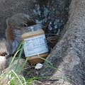 Squirrel Eating by Robert Floyd