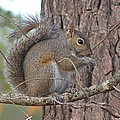 Squirrel Finds A Treat by Jeanne Kay Juhos