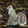 Squirrel by Gina Dsgn