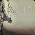 Squirrel by Gothicrow Images