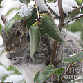 Squirrel In Snow 1 by Linda L Martin