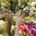 Squirrel In The Botanic Garden-dallas Arboretum V4 by Douglas Barnard