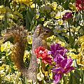 Squirrel In The Botanic Garden-dallas Arboretum V5 by Douglas Barnard